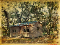 McLean Cabin (Kevin B Photo) Tags: morning nature horizontal rural florida fl oaks iphone kevinbarry lakewalesridgestateforest mcleancabin