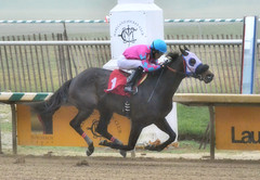 2016-01-08 (39) r2 Victor Carrasco on ! (JLeeFleenor) Tags: photos photography md marylandracing marylandhorseracing jockey   jinete  dokej jocheu  jquei okej kilparatsastaja rennreiter fantino    jokey ngi horses thoroughbreds equine equestrian cheval cavalo cavallo cavall caballo pferd paard perd hevonen hest hestur cal kon konj beygir capall ceffyl cuddy yarraman faras alogo soos kuda uma pfeerd koin    hst     ko  outside outdoors laurelpark maryland