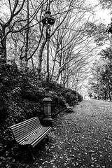 path and bench at park Thabor in moody black & white, Rennes, Brittany, France (grumpybaldprof) Tags: park wood autumn trees blackandwhite france monochrome leaves contrast french grey vanishingpoint blackwhite brittany moody path traditional atmosphere bretagne seats parkbench benches parc rennes gravel oldfashioned bencj capitalofbrittany leparcduthabor thaborgardens prefecturederegion weredesignedbydenisbhler thanor