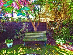Some shady spot. (davidezartz) Tags: uk greatbritain pink flowers blue trees light shadow red england sky plants brown white black green grass leaves sunshine yellow bench grey shadows pentax seat branches some spot trunk mauve flowerpot shady hdr x5 pentaxx5 someshadyspot seatinshadow