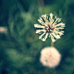 2016-05-25_19-26-05 (torstenbehrens) Tags: camera nature digital bokeh olympus f18 ep5 m45mm