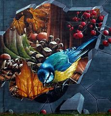 glasgow street art (Duncan the road rebel) Tags: street streetart bird art leaves graffiti glasgow creative bluetit graffitiart berrys creativeart glasgowstreetart