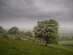 Pitstone Hill (Damian_Ward) Tags: morning tree landscape photography chilterns buckinghamshire bucks pitstone thechilterns chilternhills pitstonehill damianward ©damianward