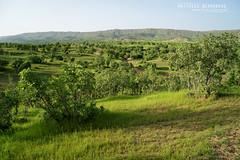 Kurdistan (MP7Aquit) Tags: iran trip 2016 sony alpha macro nature herpto wildlife ff 24x36 full frame a7ii 7ii 7mk2 sonyilce7m2 herping herpeto field herp sonya7ii sonya7mk2 sonyalpha7mark2 fe 2470 mm f4 zeiss fe2470mmf4zeiss paysage landscape habitat milieu kurdistan