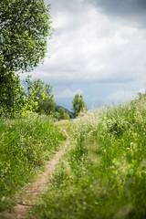 4-100 On my walk from work - just a few moments before the rain started.jpg (Albta Pilaov) Tags: 100 4 4100 beforerain deepsky grass green path sky stroll summer tree walk way