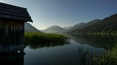 Morning view (El.buitre) Tags: a6000 morning morgen see lake reflection reflektion wasser water schilf spiegel frh early natur nature landschaft landscape weissensee krnten