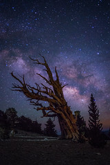 Windswept (Eric Gail: AdventuresInFineArtPhotography) Tags: ericgail 21studios canon canon70d 70d explore interesting interestingness photoshop lightroom nik software landscape nature infocus adjust california photo photographer ca cs6 topazlabs picture whitemountains patriarch grove milky way stars ancientbristlecone pine tree