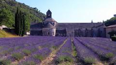 Nel profumo di lavanda (Luc1659) Tags: lavanda abbazia provenza viola campo lavender abbey violet silenzio abbaziacistercense francia