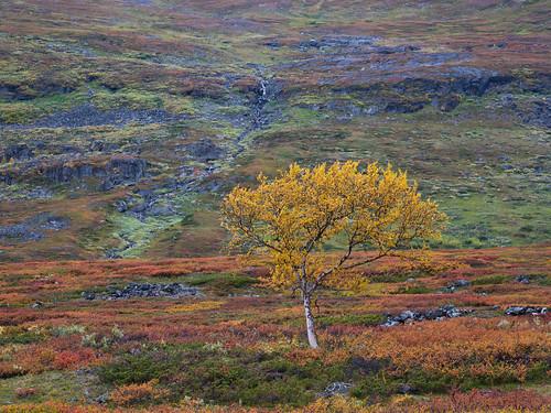 Lappland-092015-30
