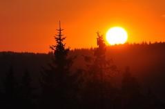 Sonnenuntergang im Schwarzwald (benedikt.Schlegenfeld) Tags: sunset orange deutschland sonnenuntergang sonne schwarzwald blackforest horizont fichte schn badenwrtemberg harmonisch tiefesonne