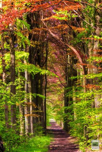 Bois du Drape - © 2015 Jean-François Schmitz