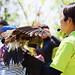 Harris Hawk, Ryoma and Bird Master Girl : ハリスホークのリョウマ