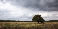 Lonely Tree under dark clouds (*Gitpix*) Tags: light sky panorama plants tree nature netherlands grass clouds landscape licht spring sony natur pflanzen himmel wolken tranquility treetrunk swamp gras marsh landschaft baum cloudscape marshland darkclouds springtime frhling sumpf baumstamm ruhe degrootepeel sumpfgebiet dunklewolken wolkengebilde nationalparkdegrootepeel swamparea nex7 sel24f18z lushfoloiage