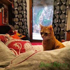 Puta Vida (Dark Botxy) Tags: red orange cute animal cat bed bedroom bonito harry potter gato cama habitacin naranja helloween roja miu bonico animalico
