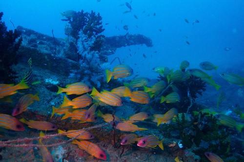 Andaman Wreck