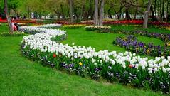 Mellat Park - Mashhad (daniyal62) Tags: flower nature fuji iran fujifilm mashhad mellatpark xa1 xf27mm