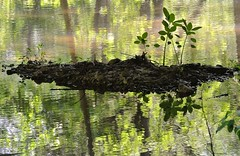 He is My Refuge (Radiogal73s) Tags: reflection water leaves soil shade greenery