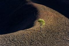 LassenTree (@marco) Tags: california usa us lassennationalpark