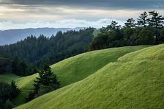 Serenity (Kirk Lougheed) Tags: california usa forest landscape evening spring unitedstates outdoor dusk hill meadow serenity mttam marincounty tamalpais mounttam mounttamalpais bolinasridge mttamalpais mounttamalpaisstatepark