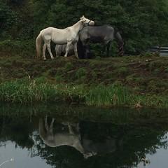 Equine Breakfast (Plastik99) Tags: ireland horse equine kildare sallins
