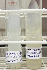 ORNG0697 (David J. Thomas) Tags: culture cave algae microbiology slant agar cyanobacteria phycology lyoncollege bg11 photobiont phycobiont