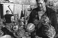 Harvest of melon (misha maslennikov) Tags: bw film nikon russia don f3 steep senshin maslennikov otherrussia