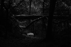 Into The Woods (ericgrhs) Tags: trees bw forest woods wald bume pfad umgestrzt verwildert