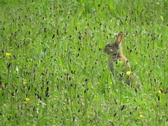 Plenty of Rabbits out this morning, absolutely love this time of year (stevencarruthers93) Tags: greenheart