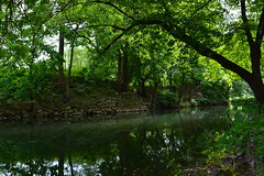 'Greenery' ii. (miranda.valenti12) Tags: trees light sunlight reflection tree green nature water leaves lines silhouette wall forest river outside outdoors leaf woods stream pa greenery leading easton