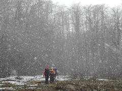 Entrada a las lengas (Mono Andes) Tags: chile trekking backpacking bosque andes invierno lengas parquenacional nevando chilecentral parquenacionalvillarrica nothofaguspumilio