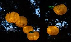 _DSC9505_2 (Elii D.) Tags: light fish flower animal night zoo monkey neon dragons lantern lampion dargon