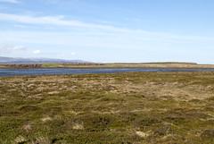 Breiafjrur, Iceland (Tiphaine Rolland) Tags: ocean sea mer water grass iceland nikon eau 1855mm 1855 herbe islande ocan 2016 breiafjrur vatnsnes d3000 nikond3000