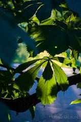 wawmorning180616_6820 (Tomasz Urbaszek) Tags: sunrise poland warsaw chestnut