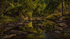 Up the creek (BAN - photography) Tags: creek rocks trees ferns grass sunlight d810 reflections pool