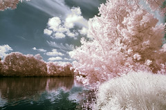 Candy cotton (Lolo_) Tags: pink france tree water rose river ir eau maine rivire berge infrared arbre mayenne grez anjou neuville infrarouge
