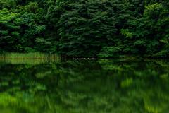 Water lilies (kurumaebi) Tags: reflection nature landscape nikon d750 yamaguchi