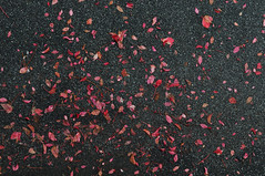 (www.tokil.it) Tags: milano italia italy foglie leaves rosse red asfalto asphalt strada street nero black contrasto contrast autunno autumn urbannature naturaurbana nikond90