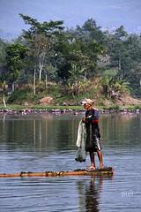 Lanamento da rede!! (puri_) Tags: indonesia pescador rede barco canas lago arvores picmonkey