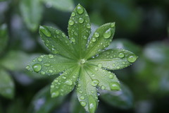 Fabulous droplets (Chris.Moakes) Tags: chris light sea flower macro tree art nature water floral up birds dark landscapes boat leaf close fireworks wildlife gull trails super petal bark daffodil tulip daisy droplet lighttrails moakes
