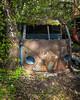 Surf's up, dude! (Birgit F) Tags: abandoned rust sweden decay junkyard scrapyard urbex carcemetery töcksfors rurex bilskrot båstnäs bilkirkegård