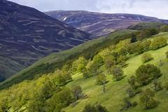 ECOSSE (michel_sarthe) Tags: river arbres paysage tilt circuit fort ecosse