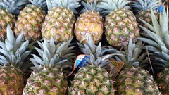 Pineapple Shopping (earthdog) Tags: 15fav food fruit shopping moblog store cellphone samsung galaxy pineapple grocerystore edible s5 2015 androidapp smg900p samsungsmg900p