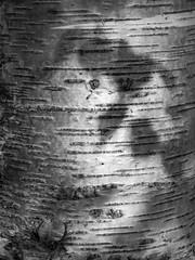 Shadows on bark (HollyWoodward2015) Tags: light shadows bark