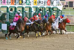 "2015-01-02 (119) r9 and they're offf (JLeeFleenor) Tags: photos photography md marylandracing laurelpark jockey جُوكِي ""赛马骑师"" jinete ""競馬騎手"" dżokej jocheu คนขี่ม้าแข่ง jóquei žokej kilparatsastaja rennreiter fantino ""경마 기수"" жокей jokey người horses thoroughbreds equine equestrian cheval cavalo cavallo cavall caballo pferd paard perd hevonen hest hestur cal kon konj beygir capall ceffyl cuddy yarraman faras alogo soos kuda uma pfeerd koin حصان кон 马 häst άλογο סוס घोड़ा 馬 koń лошадь maryland"