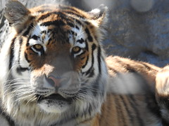 FACES (Janalene) Tags: animals zoo faces closeups