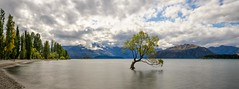 The Wanaka Tree (m_haefeli) Tags: autumn newzealand panorama lake tree nikon pano herbst panoramic nz lonely nikkor kiwi wanaka lonelytree neuseeland d7000