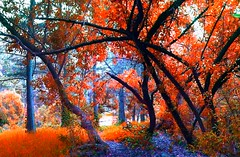 """Surreal Fall in GG (""""Cisco Kid"""") Tags: trees nature leaves photoshop pano"""