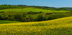 Countryside Panorama (jfusion61) Tags: flowers italy panorama field landscape spring nikon tuscany siena montepulciano 2470mm d810