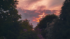 @ home ... (PhilDL) Tags: uk trees sunset england color colour tree nature colors clouds outside outdoors evening nikon colours shadows sundown natural may shades sunburst southcoast fireinthesky amateurs springtime nikonuk