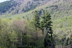 Chittenden, Vermont - 5/23/16 (myvreni) Tags: nature landscape outdoors spring vermont